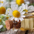 【風邪、花粉症】鼻のムズムズ、咳はアロマオイルで簡単に解消!