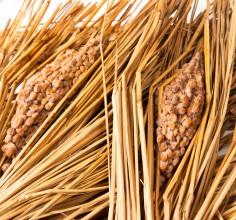 免疫力を高める最強伝統食品「納豆」。子供もおいしく食べられる、栄養効果が高まる食べ方のポイントは3つ!